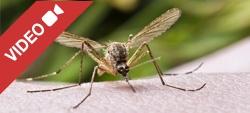 Prodotti anti-zanzare: quali sono i più efficaci?