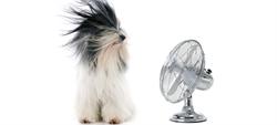 Ventilatore sì, ma quale scegliere?