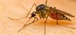 Pastiglie, ultrasuoni, olii essenziali... ecco 5 metodi inutili contro le zanzare